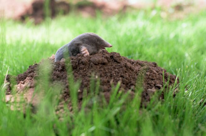 making a mountain out of a molehill